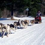 Dogsledging