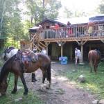 Horses in Algonquin Park