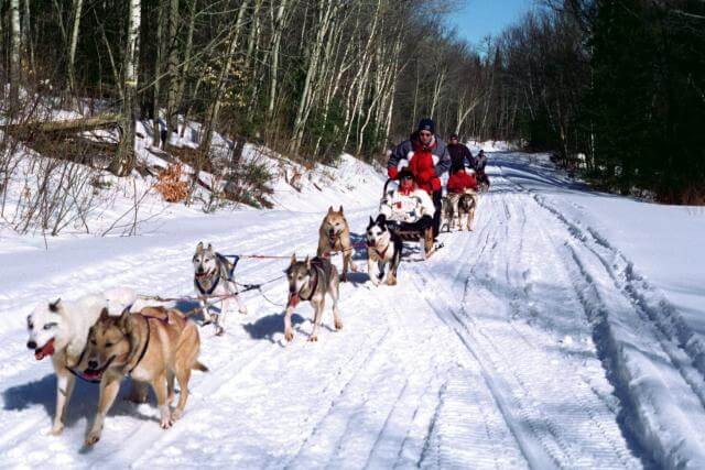 Photo of a Group of Dog Sledders During an Algonquin Park Winter Getaway.